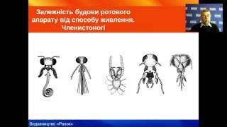 Біологія. 7 клас. Аналіз фізіологічних систем тварин на прикладі травної системи