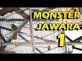 Dunia Kicau Kapas Tembak Monster Juara  Di Event Molosan Juta Cup Skw  Mp3 - Mp4 Download