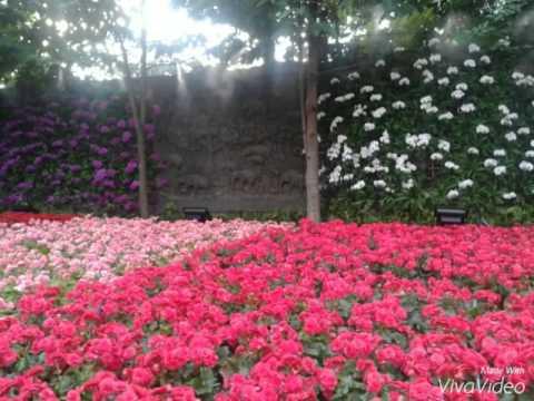 รูปดอกไม้สวยๆ