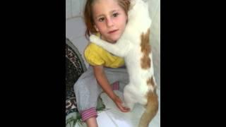 Kedinin kucaklaması