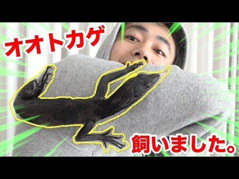 【巨大】オオトカゲがお家にやってきました!!