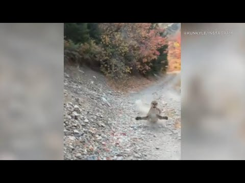 Viral video shows cougar stalking Utah hiker in terrifying 6-minute encounter - FULL VIDEO   ABC7