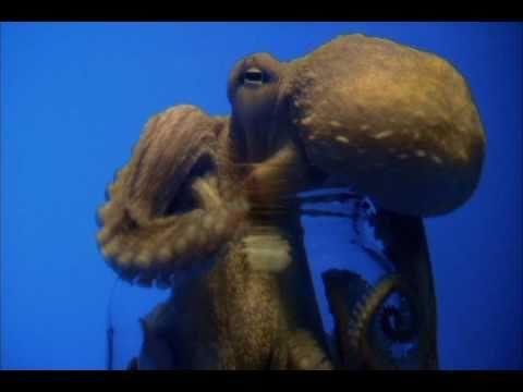 Octopus Opens Jar: Promo | CBC