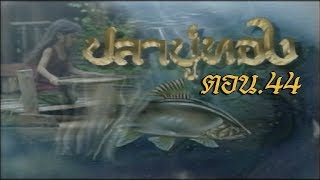 ปลาบู่ทอง ตอน 44