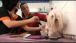 Ring Central (peluquería canina) Enrique de la Morena - Hyrkanya