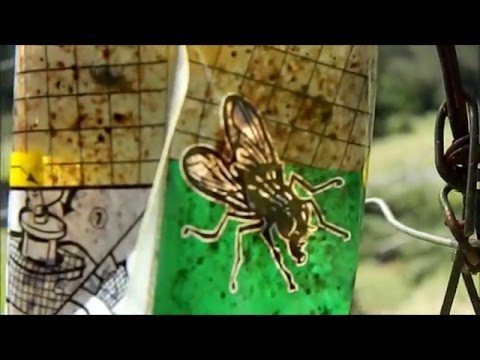 DIY - A War Against Black Biting Flies - How We Stopped The Bitting Flies
