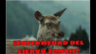 ¡LA ESCALOFRIANTE ENFERMEDAD DEL CIERVO ZOMBIE! | Cat Space