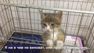 Витебский приют для животных