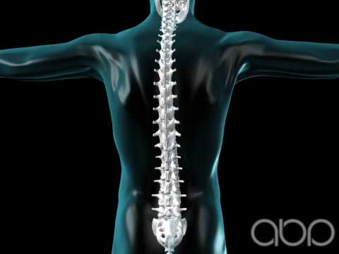 Spine Flexing - Vertebral Column - 3D Medical Animation || ABP ©