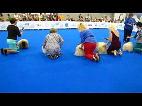 World Dog Show 2016 пекинесы кобели и ЛПП