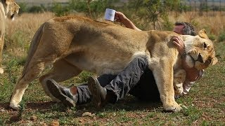 lions-vs-coffee-the-lion-whisperer