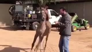 Арабская порода 😉