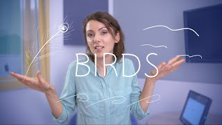 Weekly Russian Words with Katya - Birds
