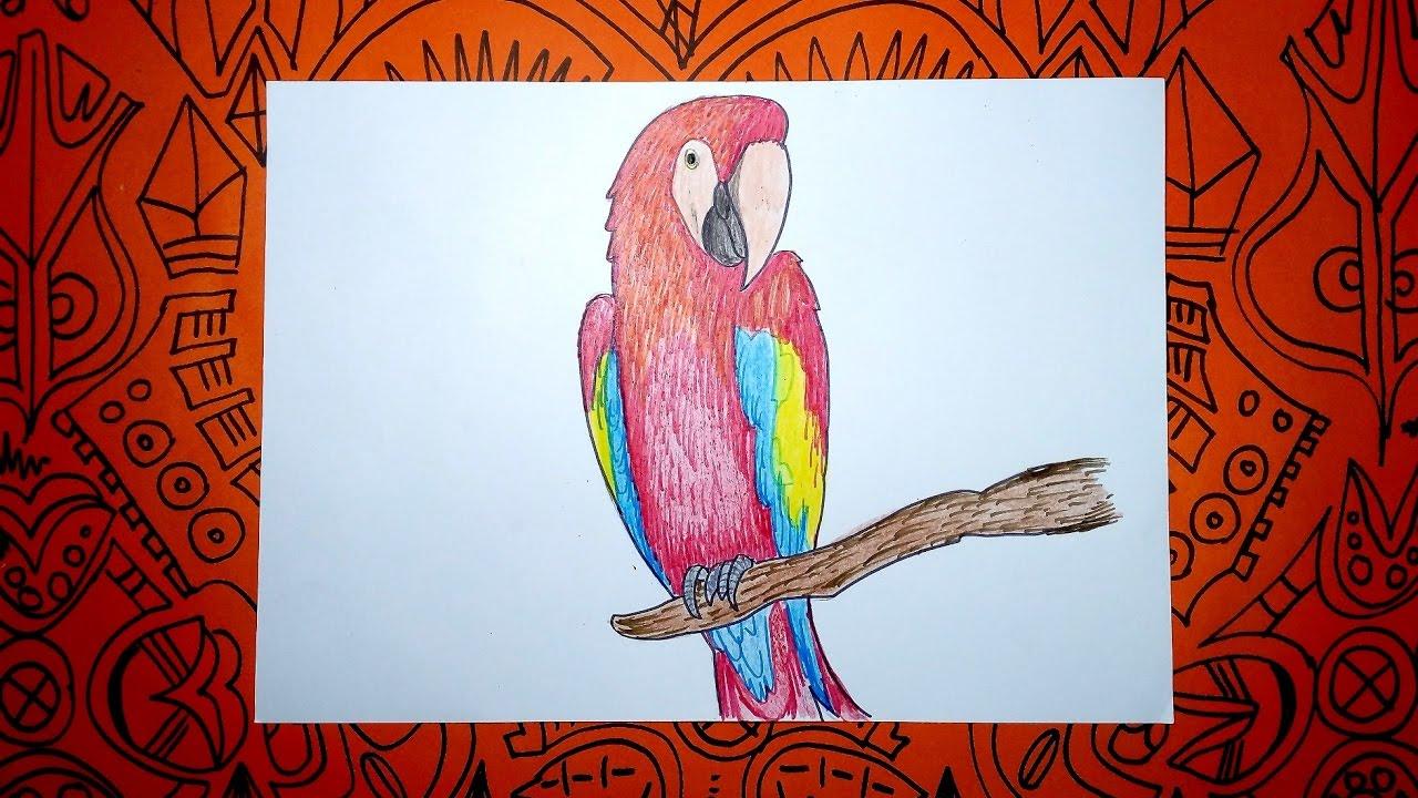 Aprende A Dibujar Una Guacamaya Con Colores Pasos Sencillos Youtube