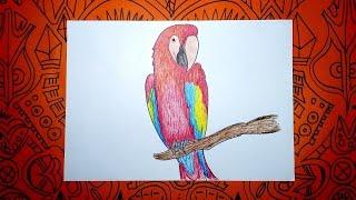 Aprende a dibujar una Guacamaya con colores - Pasos sencillos