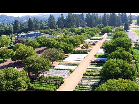 Kendall-Jackson Wine Estate & Gardens | Culinary Gardener Tucker Taylor