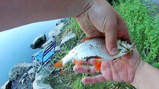 Рыбалка на реке Ингул на маховую удочку Так сказать получилась ничья 31 07 2021