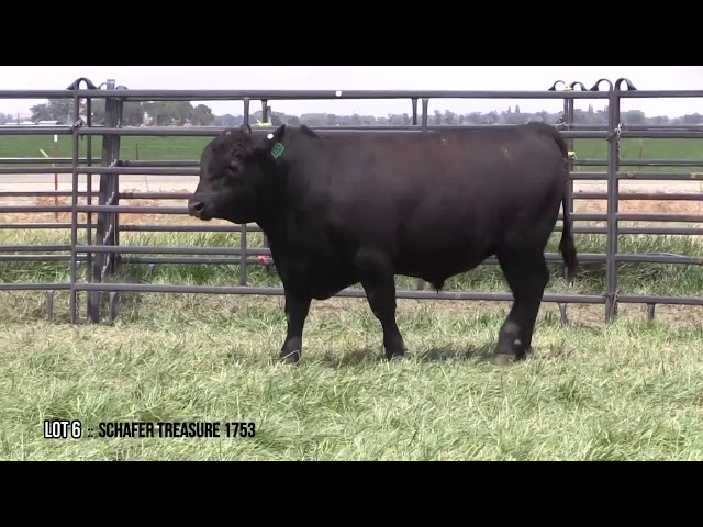 Mid Valley Bull Sale Lot 6