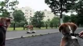 Топ 10  Самых умных животных
