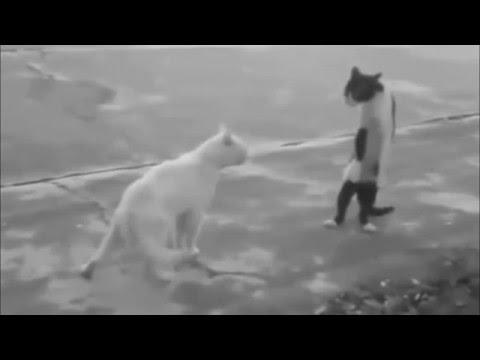 Funny Cat Videos - 1 minute Watch it