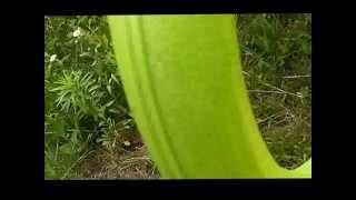 Эко Дом. Чистка изделий из пластмассы(В данном разделе будут публиковаться видео, в которых будет показан принцип работы с продукцией ТМ