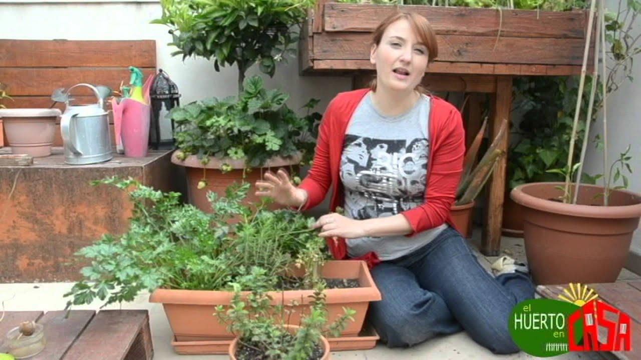 El huerto en casa 26 hierbas aromaticas youtube for Plantas beneficiosas para el huerto