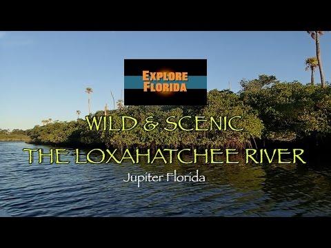 Explore Florida Wild & Scenic Loxahatchee River