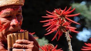 Las plantas magicas que usan los chamanes