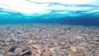 Зимняя рыбалка на Колыме .(Хариуза на прогулке., 2016-12-18T14:22:42.000Z)