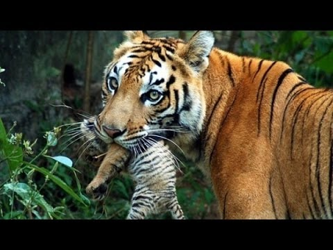 wildlife documentary - Wild Thailand A Land of Beauty - Disc