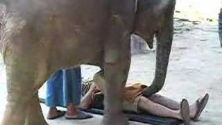 Torture By Elephant