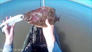 Flounder Tips for Beginners!