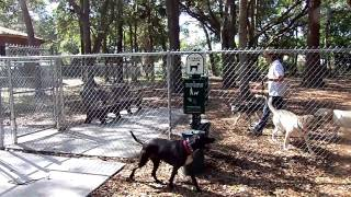 Off Leash Recall Meeting Aggressive Acting Dog Dogtra E Collar Pager Nick