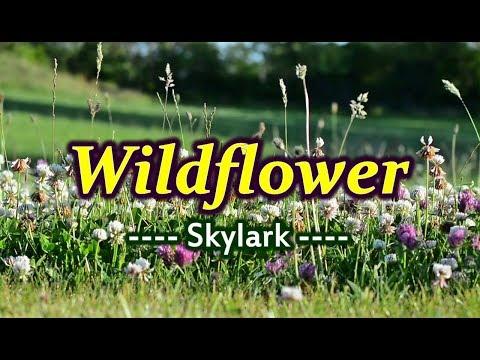 Wildflower - Skylark (KARAOKE)
