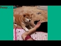 Jealous Dogs Want Attention From Their Owners Videos Compilation 2017