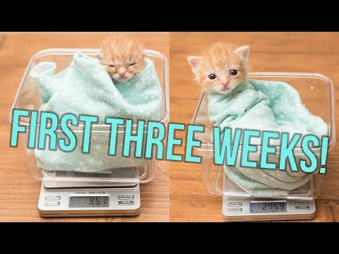 UPDATE: Baby Hank's First Weeks!