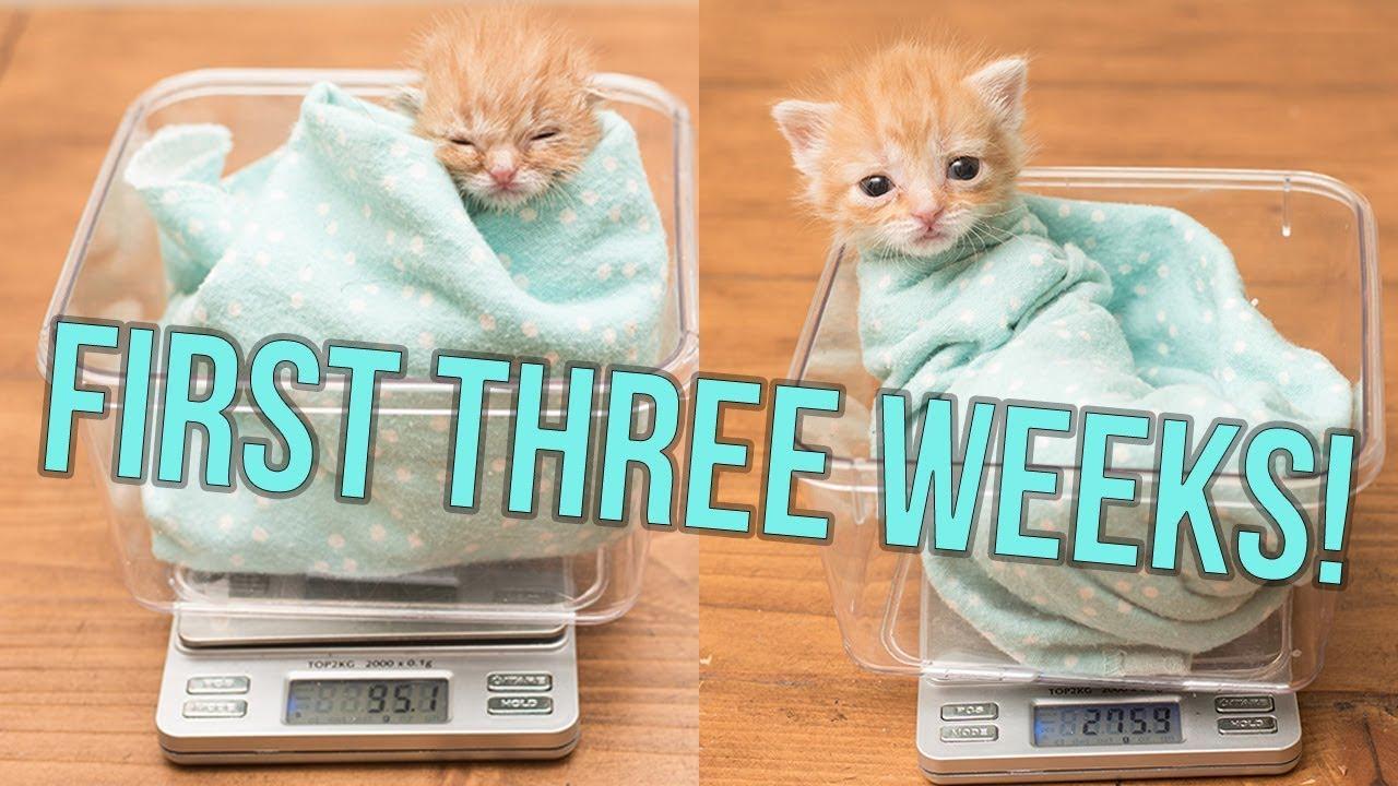 update-baby-hank-s-first-weeks