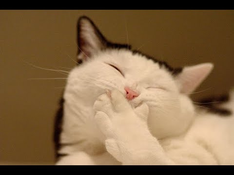 Cats Are So Funny You Cannot Stop Laughing - Funny Cat Compilation