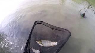 Pescuit scobar si clean pe Siret 14 iunie 2018