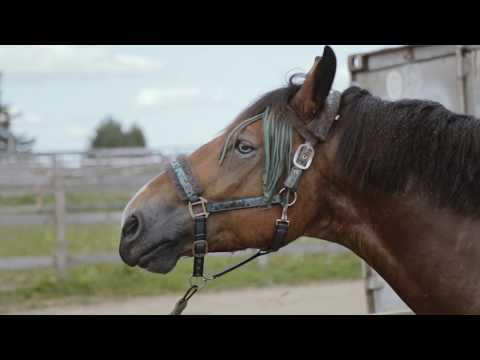 """Сялянска-фермерская гаспадарка """"Green Ranch"""". Частка 1: Рай для коняў"""