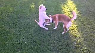 Dog give head to a dog