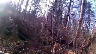 Охота на кабана с лайкой видео