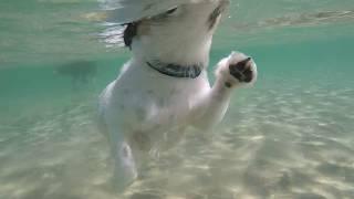 Купание собак в море - лагерь в Анапе 2018