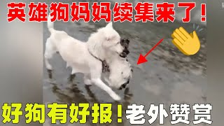 Sichuan hero dog mother was  adopted by well-wishers, even foreigners were moved!