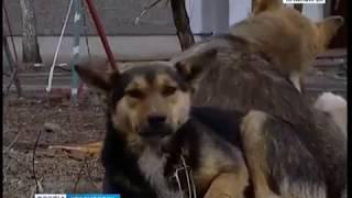 Бездомные собаки терроризируют жителей Красноярска