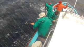Tuna fishing Cape Town (963)