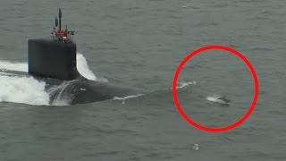 Pod Of Dolphins Swim In Front Of Submarine