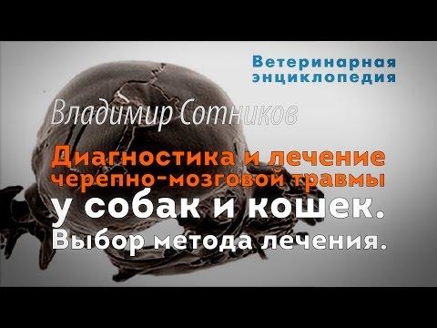 Ветеринар на дом Харьков (093)408-09-36 - Сайт vetpomoshnadom!