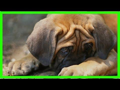 Nasenbluten Beim Hund: Erste Hilfe