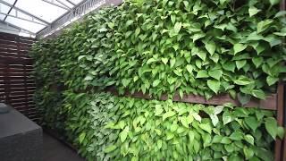 Natura Urban Plantscaping